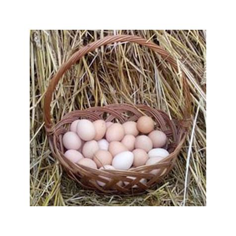 Uova di gallina fresche